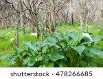 Lush Green Foliage And White...