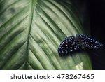 Beautiful Butterfly. Green...