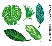 tropical leaves collection.... | Shutterstock . vector #478290385