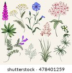 Stock vector collection of herbs and flowers vintage floral set colorful flower illustration flower in the 478401259