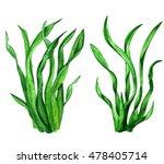 nori. watercolor sea weed.... | Shutterstock . vector #478405714
