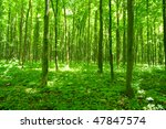forest in spring | Shutterstock . vector #47847574