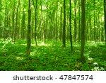 forest in spring | Shutterstock . vector #47847574