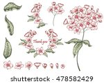 collection of branches with... | Shutterstock .eps vector #478582429