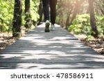Woman Hiking Trail On Wooden...