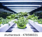 greenhouse plant row grow with... | Shutterstock . vector #478588321