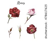 roses and leaves  watercolor ... | Shutterstock . vector #478617625