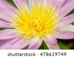 close up shot of pink water... | Shutterstock . vector #478619749
