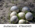 ostrich eggs in the sand | Shutterstock . vector #478660405