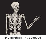 human skeleton posing isolated...
