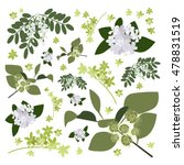 set of drawing wild flowers ... | Shutterstock .eps vector #478831519