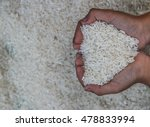 rice is a grain of rice plants... | Shutterstock . vector #478833994