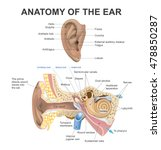 the human ear consists of three ... | Shutterstock .eps vector #478850287