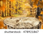autumn forest and tree trunk... | Shutterstock . vector #478921867