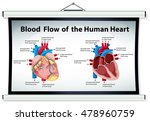 diagram showing blood flow in... | Shutterstock .eps vector #478960759