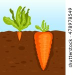big and small carrot. vector... | Shutterstock .eps vector #478978549