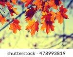 Autumn Leaves On Sky. Toned...