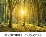 autumn forest with the cut...   Shutterstock . vector #479014489