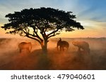 elephant and man hometown in... | Shutterstock . vector #479040601