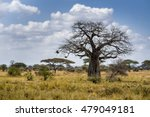 Baobab Tree Savana Africa...