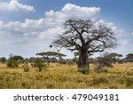 Baobab Tree Savana Africa...