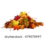 pile of autumn colored leaves... | Shutterstock . vector #479070997