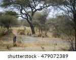 antelope in africa | Shutterstock . vector #479072389