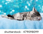 Stock photo sleeping kitten 479098099
