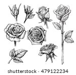 Stock vector vector roses with leaves set on white background 479122234