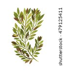 watercolor wood twigs and... | Shutterstock . vector #479125411