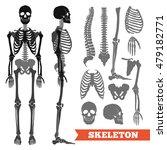 human anatomy flat monochrome... | Shutterstock .eps vector #479182771