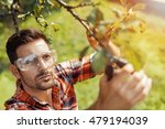 Gardener Cuts Dry Branches Of...
