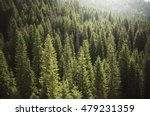 pine tree forest from above | Shutterstock . vector #479231359
