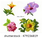 four hibiscus flowers.... | Shutterstock . vector #479236819