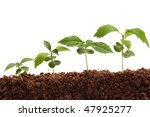 four plants growing from soil | Shutterstock . vector #47925277