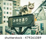 Cat On A Signal In Ginza In...
