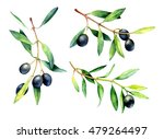 set of watercolor olive... | Shutterstock . vector #479264497