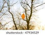 Late Autumn. The Last Leaf Of...