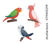 cartoon parrots set and parrots ... | Shutterstock .eps vector #479345299