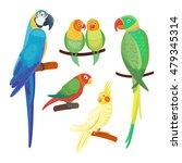 Cartoon Parrots Set And Parrot...