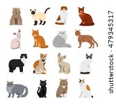 cat breeds cute pet animal set... | Shutterstock .eps vector #479345317