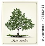 beautiful tree on a white... | Shutterstock .eps vector #479383495