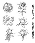 roses buds icons. vector pencil ... | Shutterstock .eps vector #479396935