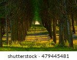 Parallel Alignment Of Poplar...