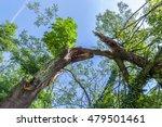 Storm Damage. Broken Tree In...