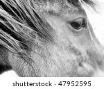 Horses face - stock photo