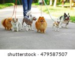 Stock photo woman walking dogs in park 479587507