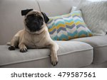 pug dog on couch | Shutterstock . vector #479587561