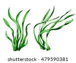 Sea Weed. Watercolor. Green...