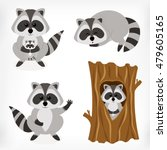 raccoon set with standing... | Shutterstock .eps vector #479605165